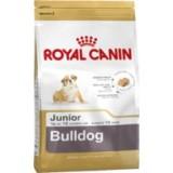 Bulldog Junior
