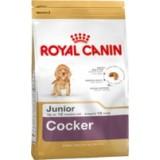 Cocker Junior