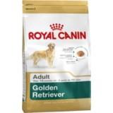 Golden Retriever Adult