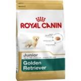 Golden Retriever Junior