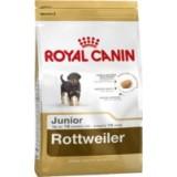 Rottweiler Junior