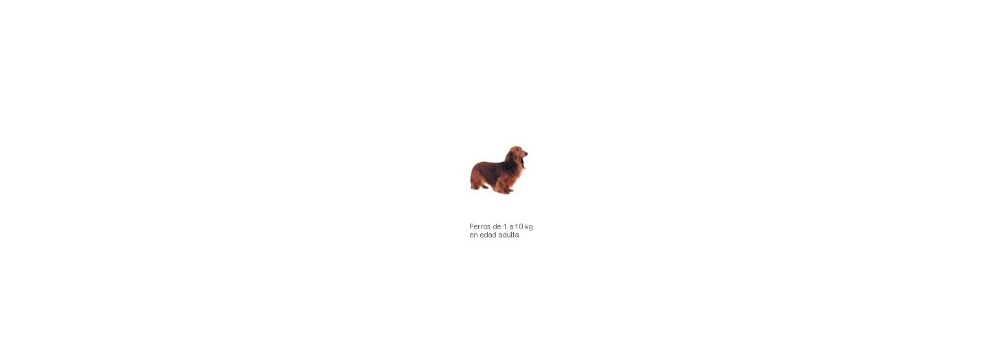 Adv. Dog Mini